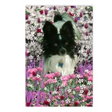 Matisse the Papillon in F Postcards (Package of 8)