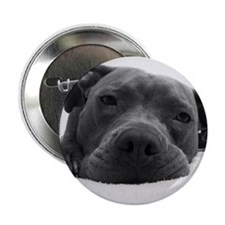 """Cute Black And White Pit Bull Face 2.25"""" Button"""
