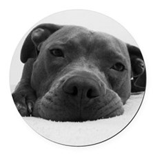 Cute Black And White Pit Bull Fac Round Car Magnet