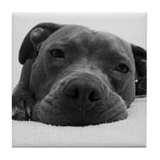 Cute Black And White Pit Bull Face Tile Coaster