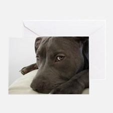 Awesome Pit Bull Face Greeting Card