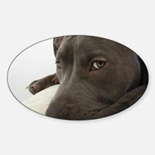 Awesome Pit Bull Face Decal