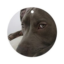 Awesome Pit Bull Face Round Ornament