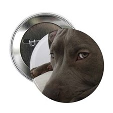 """Awesome Pit Bull Face 2.25"""" Button"""