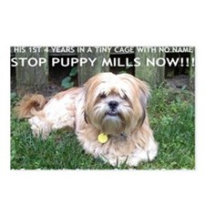 Dusty - Puppy Mill Surviv Postcards (Package of 8)