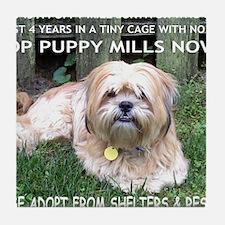 Dusty - Puppy Mill Survivor Tile Coaster