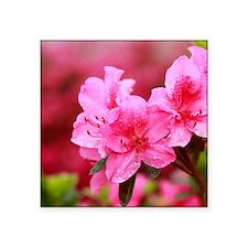 "Pink azaleas Square Sticker 3"" x 3"""