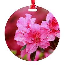 Pink azaleas Ornament