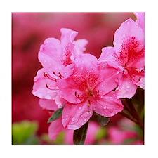 Pink azaleas Tile Coaster