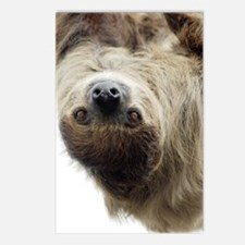 Sloth 84 inch Postcards (Package of 8)