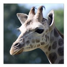 "Giraffe Panel Print Square Car Magnet 3"" x 3"""