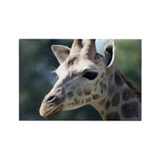 Giraffe Panel Print Rectangle Magnet