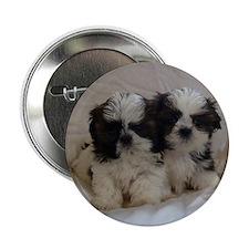"Two Shih Tzu Puppies 2.25"" Button"