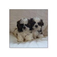 "Two Shih Tzu Puppies Square Sticker 3"" x 3"""