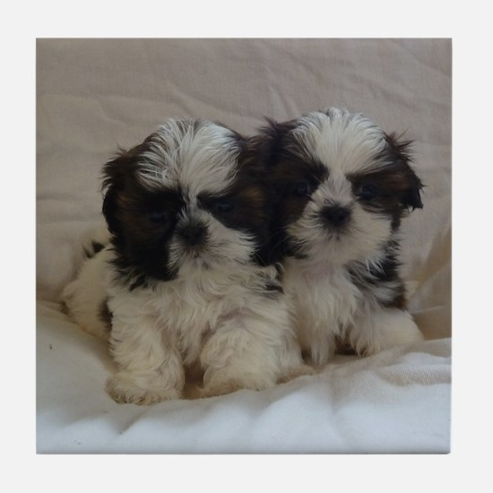Two Shih Tzu Puppies Tile Coaster