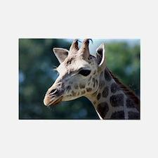 Young Rothschild Giraffe 5x7 Rug Rectangle Magnet