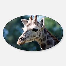 Young Rothschild Giraffe 5x7 Rug Decal
