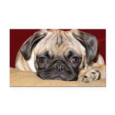 Adorable iCuddle Pug Puppy Rectangle Car Magnet