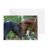 Horses Greeting Cards