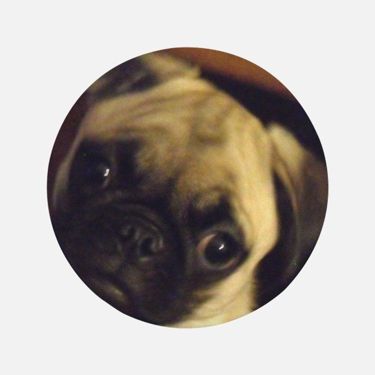 """Adorable fawn pug puppy face 3.5"""" Button"""