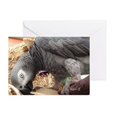 African Grey Parrot - Wall-E Greeting Cards