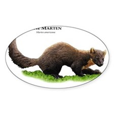 Pine or American Marten Decal