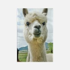 alpaca face notebook Rectangle Magnet