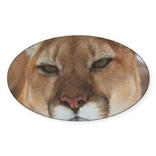 Big Face Animal - Panther Decal