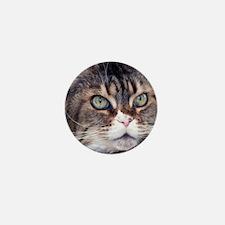 Big Face Animal - Maine Coon Cat Mini Button