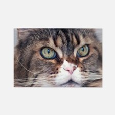 Big Face Animal - Maine Coon Cat Rectangle Magnet