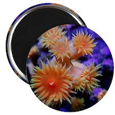 CRE Dendrophyllia Magnet