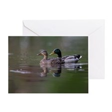 Swimming Ducks Greeting Card