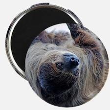 Sloth Round Cocktal Plate Magnet
