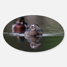 Swimming Wood Duck Decal