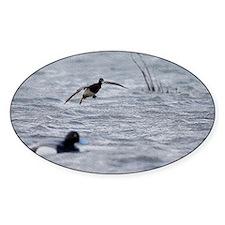 Flying Bluebill Duck Decal