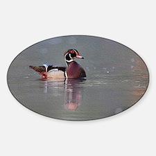Wood Duck Portrait Decal