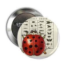 "WWLadybug©jwf 2.25"" Button"