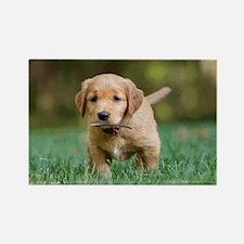 Puppy-Golden Retriever Rectangle Magnet