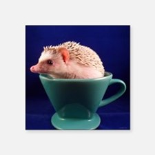 ".hedgie in a cup. Square Sticker 3"" x 3"""