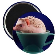 .hedgie in a cup. Magnet