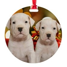 Christmas Dogo Puppies Ornament