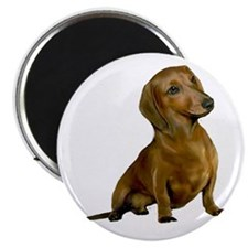 Brown / Red Dachshund Magnet