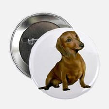 "Brown-Red Dacshund 2.25"" Button"