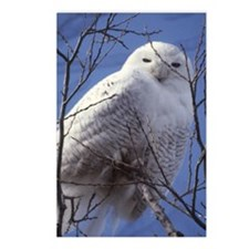 Snowy White Owl, Blue Sky Postcards (Package of 8)