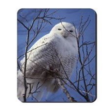 Snowy White Owl, Blue Sky Mousepad