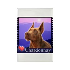 Doberman Fawn Rectangle Magnet (10 pack)