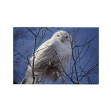 Snowy White Owl, Blue Sky Rectangle Magnet