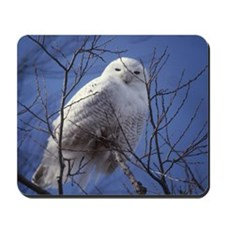 Snowy White Owl, Blue Sky Mousepad