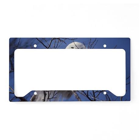 Snowy White Owl, Blue Sky License Plate Holder