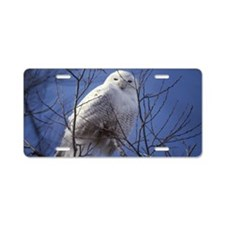Snowy White Owl, Blue Sky Aluminum License Plate